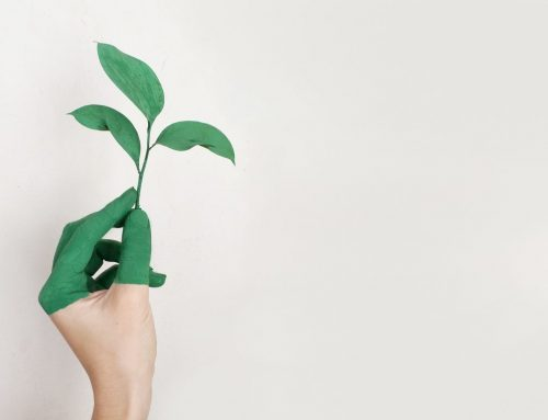 Eco-Friendly Alternatives To Keep Your Home Clean